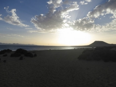 Canaries-4
