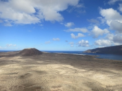 Canaries-5