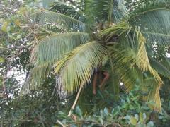 Tobago-6
